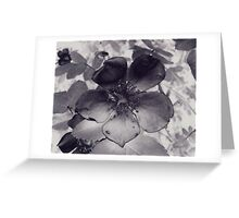 Alberta Wild Rose Greeting Card