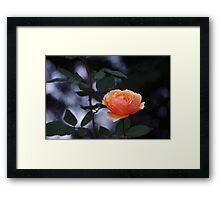 Independent Flower Framed Print