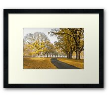 Gostwyck Road is lined with Gold - Uralla NSW Australia Framed Print