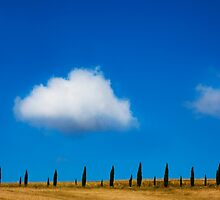 Tuscany Cypress by Andrew Bret Wallis