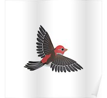 Flying House Finch Poster