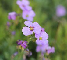 Flower by steveworks