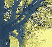 An Eerie Light Through The Branches by Fara
