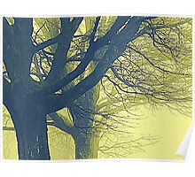 An Eerie Light Through The Branches Poster