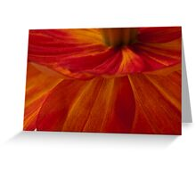 Orange Zinnia Flower Petals - Macro  Greeting Card