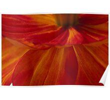 Orange Zinnia Flower Petals - Macro  Poster