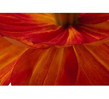 Orange Zinnia Flower Petals - Macro  Photographic Print