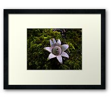 Earth Star Puffball Framed Print