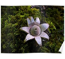 Earth Star Puffball Poster