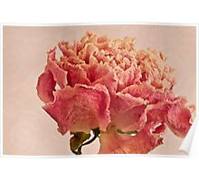 Dried Peony Macro - Textured Background  Poster