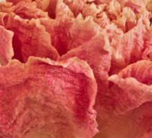 Dried Peony Macro - Textured Background  Sticker