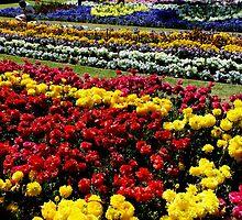 Flower Gardens Toowoomba Queensland Australia by sandysartstudio