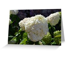 Beautiful white large round flower Greeting Card