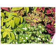Colorful pattern of leaves Poster