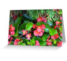Red delicate flowers and green leaves pattern Greeting Card