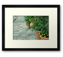 Plants in flower pots on the pavement Framed Print