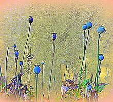 Opium Seeds Against An Old Wall by Fara
