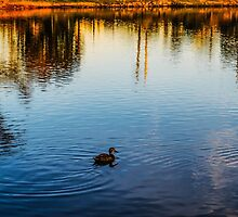 The Lonely Duck by naomieburgess94