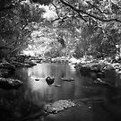 Freshwater Creek by Mel Brackstone