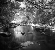 Freshwater Creek by Mel Brackstone