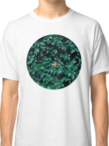 Orange horse in the bush Classic T-Shirt