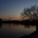 A Bare Willow Tree by Adam Kuehl