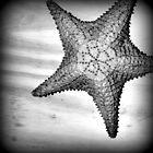 Star by Moonpebble