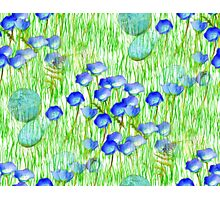 Blue Flowers Stones And Green Grass Photographic Print