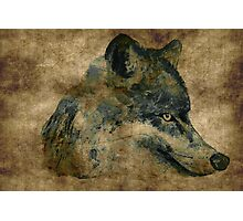 Wolf acrylics on paper textures Photographic Print