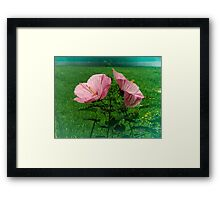 TWO PINK HYACINTHS Framed Print