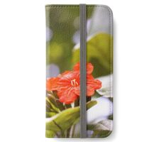 St Lucia Beauty iPhone Wallet/Case/Skin