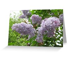 Lilac 6 Greeting Card