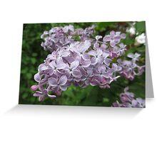 Lilac 5 Greeting Card