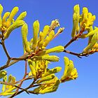 Kangaroo Paw - Big Yellow 2 by Graeme  Hyde