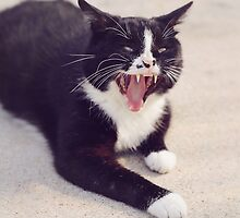 Vampire Cat by Trish Mistric