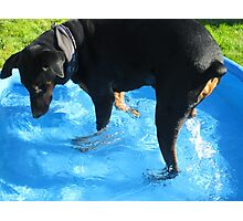 Laps in the Pool Photographic Print