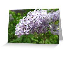 Lilac 1 Greeting Card