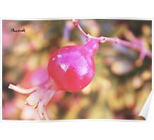 The little pomegranate Poster