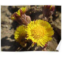 Like Flowers in a Desert  Poster