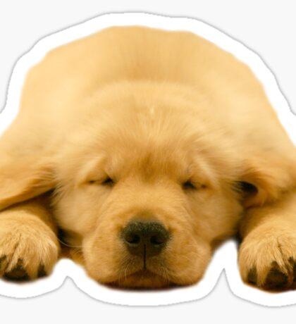 Sleeping Golden Retriever Puppy Sticker