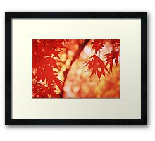 Sunlight Behind Vintage Autumn Leaves 2 Framed Print