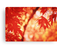 Sunlight Behind Vintage Autumn Leaves 2 Canvas Print