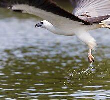 Off And Flying  by byronbackyard