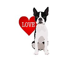 I love Boston Terriers Photographic Print