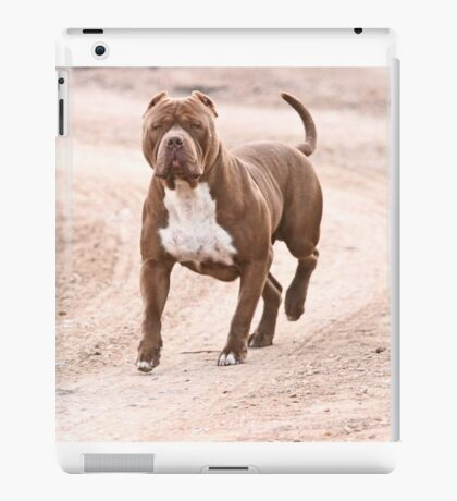 Hexin the pit bull  iPad Case/Skin