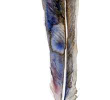 Feather watercolor blue green brown Sticker