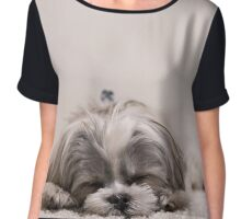 Sleeping Puppy Chiffon Top