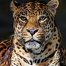Portrait of Leopard by Savannah Gibbs