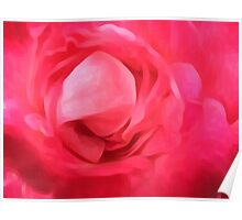 closeup red rose texture abstract background Poster