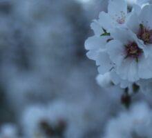 Spring Blossoms Sticker